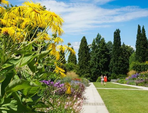 Local garden re-opens Centenary Border